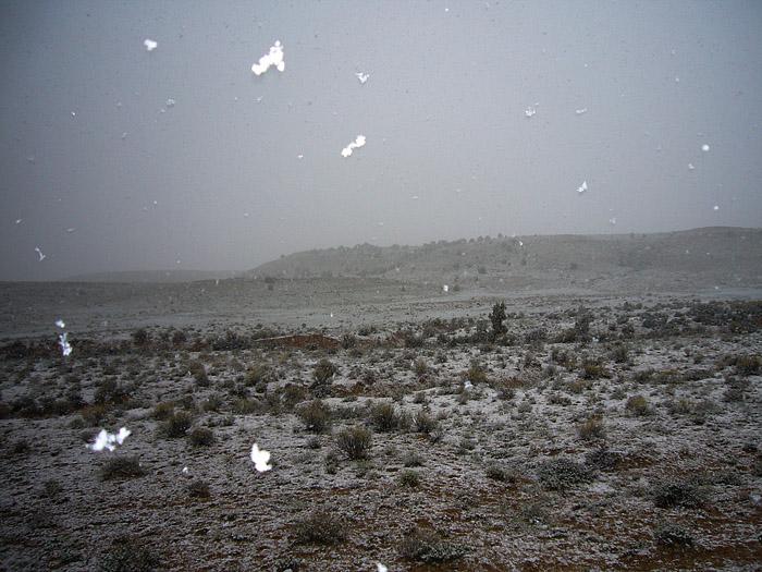 Snowy Splendor